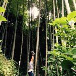 2017年8月6日(日)「〜アシュタンガヨガ 徹底研究〜 」ワークショップ開催します♪【神戸・三宮】